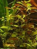 دانلود رایگان کتاب گیاهان آبزی برای دانشگاه پیام نور